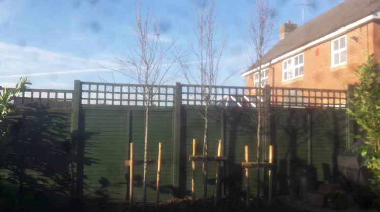 Screening the Neighbours